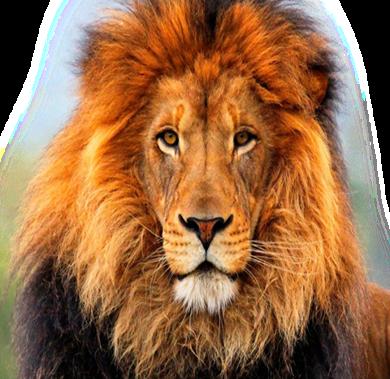lion-chaser